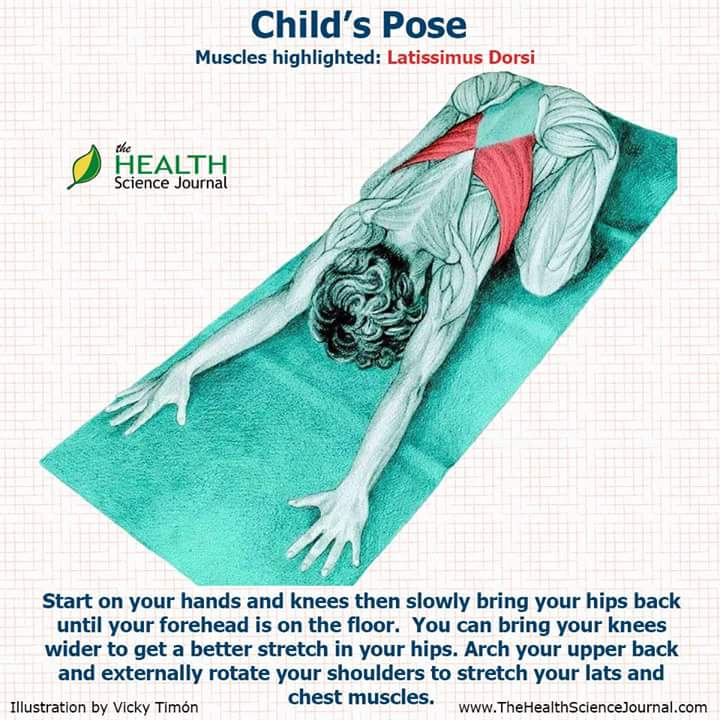 anatomy, child pose, badrasana