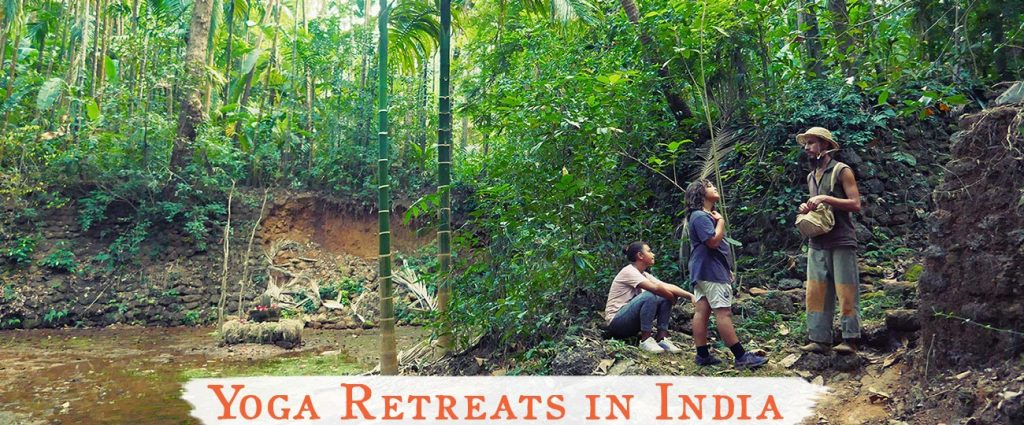 shree hari yoga retreats in india, jungle photo in gokarna, south india, forest with shrine in gokarna, shivalingam in forest